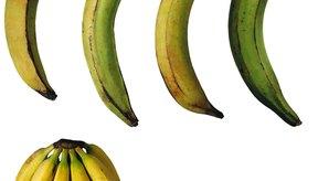 El plátano tiene un alto contenido de vitamina B6.