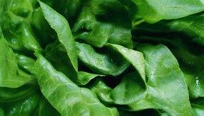 Almacena verduras de hoja para hacer ensaladas rápidas.