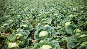 Entre las úlceras que curan tanto las úlceras como la gastritis se incluyen los vegetales de hojas verdes.