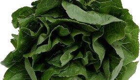 Los vegetales de hoja verde son ricos en magnesio y calcio.