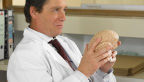 El cerebro es parte del sistema nervioso central.