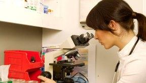 Las muestras de heces fecales se obtienen para realizar pruebas de laboratorio.