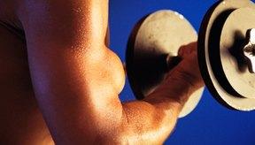 Aprende qué ejercicios se concentran en la cabeza larga de los bíceps.