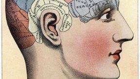 Los neurotransmisores desempeñan un rol importante en las conductas humanas.