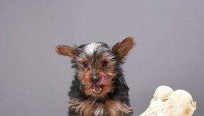 Los osteoclastos son las células responsables por la descomposición del hueso; los pequeños perros que roen intentan hacerlo también.