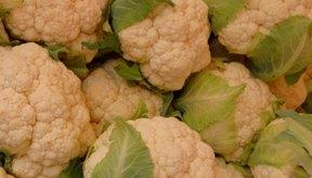 La coliflor puede congelarse sin ser blanqueada previamente.
