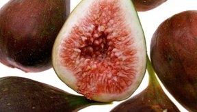 Los higos son la fruta más vieja conocida en ser cultivada por el hombre.