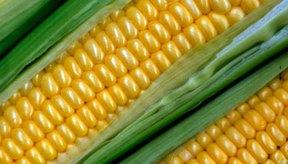 El maíz fresco se almacena mejor descubierto en el refrigerador.