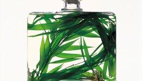 Agrega a una botella de aceite vegetal unas hierbas para formar un hermoso regalo cosmético.