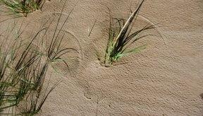 Incluso una playa que se ve pacífica puede alojar moscas de arena.