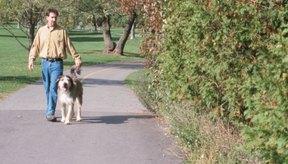 El ejercicio suave, como caminar, puede ser beneficiosos luego de una fractura de coxis.