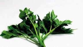 Las verduras de hoja verde son buena fuente natural de folato.