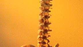 Tu médico recomendará ejercicios para reducir el dolor en tu cóxis.