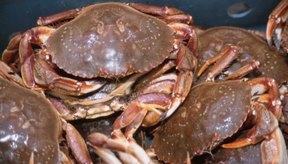 Los cangrejos son una fuente dietaria de proteína y potasio.