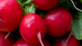 Todos los tipos de rábanos se pueden estofar, saltear, asar, cocer a vapor o hervir.