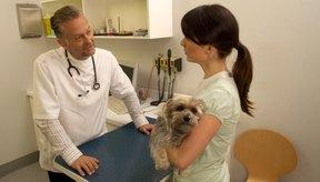 Lleva a tu perro al veterinario si sospechas que tiene parásitos en la piel.