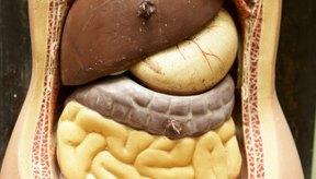 La digestión tiene seis etapas.