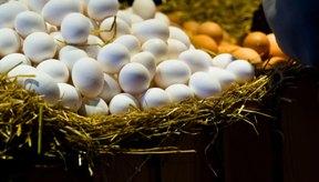Las claras de huevo son muy bajas en calorías y grasa en lugar de los huevos enteros.