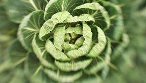 Las verduras contienen celulosa.