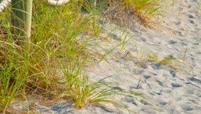 Hay algunas cosas en la playa que pueden causarte picazón e irritación.