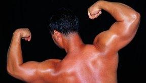 Los levantamientos de pesas son buenos para la fuerza de la espalda.