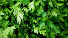 La clorofila es una sustancia natural que da a las plantas su color verde.