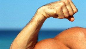 Los ejercicios de levantamiento de pesas regulares pueden ser suficientes para construir músculo.