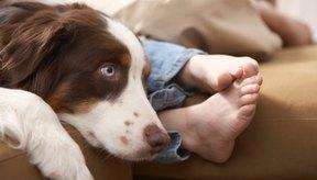 Haz que el perro se mueva si está sobre tu pierna comprimiendo el nervio.