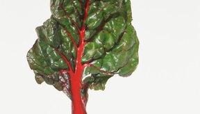 La acelga roja es naturalmente baja en colesterol y grasa.
