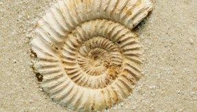 Los fósiles son confiables para el estudio de la vida en el planeta Tierra.