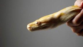 Las serpientes mudan de piel con frecuencia.