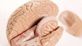 En el lóbulo temporal con déficit de atención, existe una actividad anormal en los lóbulos frontal y temporal izquierdos.