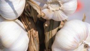 El ajo contiene propiedades antisépticas y antibacterianas.