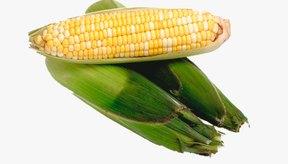 El maíz en grano se corta de la mazorca.