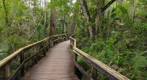 16 Out Of This World Hiking Spots In Florida