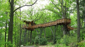 Here Are 10 Amazing Pennsylvania Treehouses You'll Want To Visit Right Away
