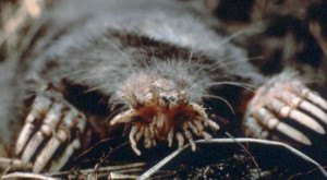 These 10 Deadly Animals in Pennsylvania Could Haunt Your Nightmares