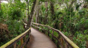 27 Amazing State Parks in Florida That Show Off The State's Natural Beauty