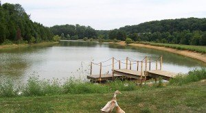 The 15 Best Places In Indiana To Go On An Unforgettable Picnic