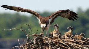 These 33 Beautiful Shots Of Birds In Virginia Are Majestic