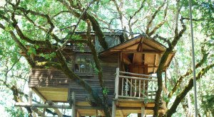 This Treehouse Resort In Oregon Will Give You An Unforgettable Experience