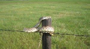 16 Photos Of Wildlife In Nebraska That Will Drop Your Jaw