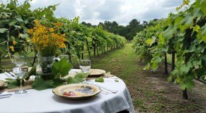 These 9 Beautiful Wineries In Florida Are A Must-Visit For Everyone