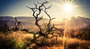 15 Eerie Shots In Arizona That Are Spine-Tingling Yet Magical