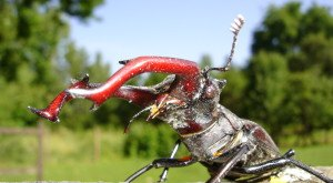 These 15 Bugs Found In Ohio Will Send Shivers Down Your Spine