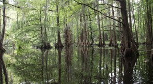 9 Amazing Parks In Louisiana That You Have To Visit
