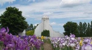 These 10 Charming Farms In Michigan Will Make You Love The Country