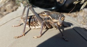 These 14 Bugs Found in Utah Will Send Shivers Down Your Spine