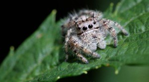 These 15 Bugs Found In Tennessee Will Send Shivers Down Your Spine