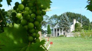 These 10 Beautiful Wineries And Vineyards In New Jersey Are A Must-Visit For Everyone
